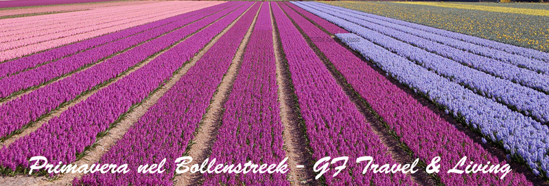 Un campo fiorito nel Bollenstreek