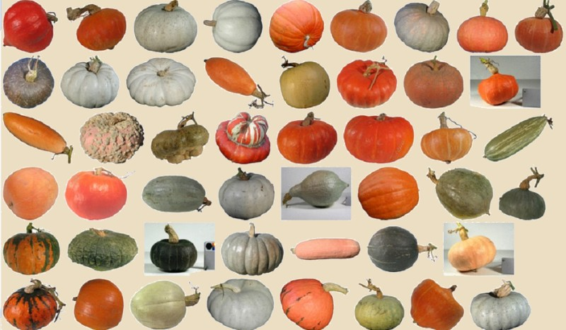 Ottobre, il mese della zucca- Gluten Free Travel and Living