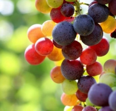 Acini di uva- Gluten Free Travel & Living