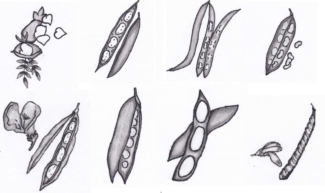 disegni di Raffaella Nordio