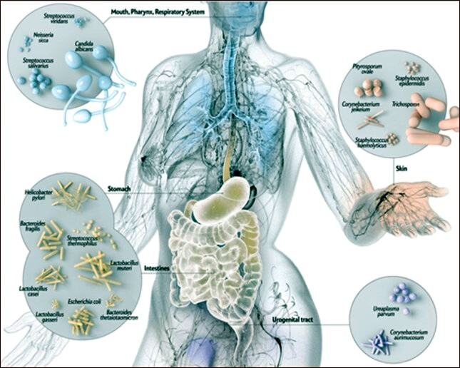 sistema immunitario gluten free travel and Living