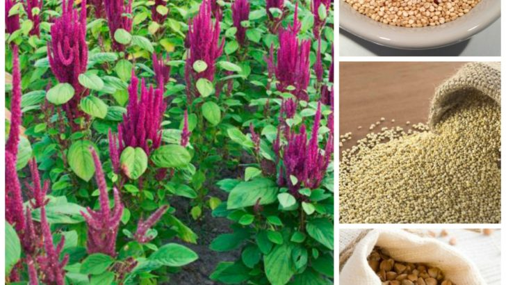 La pasta senza glutine con pseudocereali o legumi