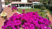 Vela bianca club Isola d'Elba