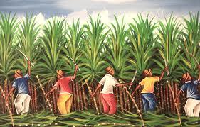 raccoglitori di canna da zucchero
