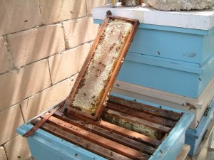 Sealed_Honey_in_frame