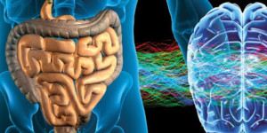 Gut microbiota e salute mentale