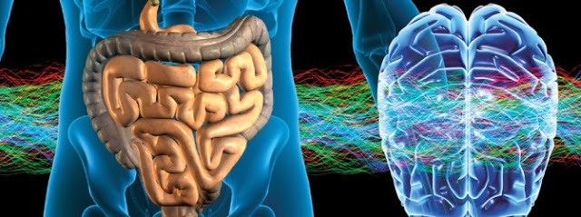 gut microbiota - gluten free travel and living