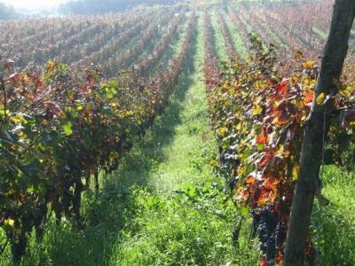 Spalliera di uva - Gluten Free Travel & Living
