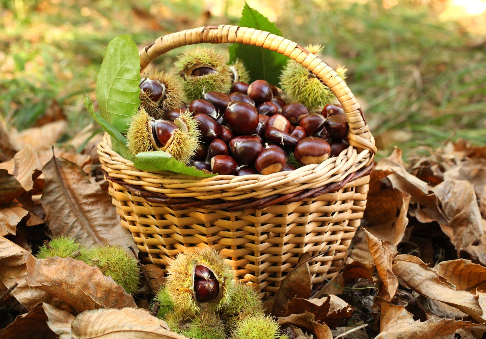 Novembre e le Castagne - Gluten Free Travel and Living